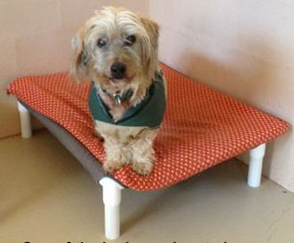 a sweet little guy at best friends makes use of his new bed